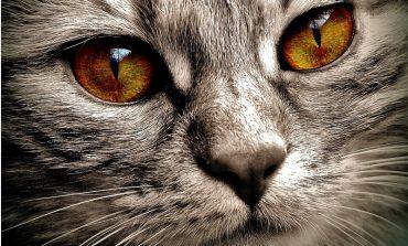 Rosyjscy miłośnicy zwierząt oburzeni na Aeorofłot po śmierci kotów w luku bagażowym samolotu