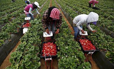 Polska zdecydowała o ułatwieniach w podejmowaniu pracy przez pracowników sezonowych ze Wschodu