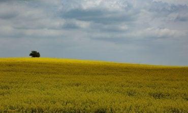 Na Ukrainie od odzyskania niepodległości nielegalnie sprywatyzowano ponad 5 mln ha ziemi